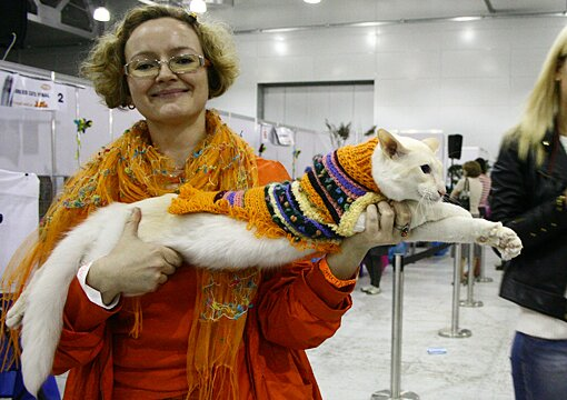 балинез, балийский кот