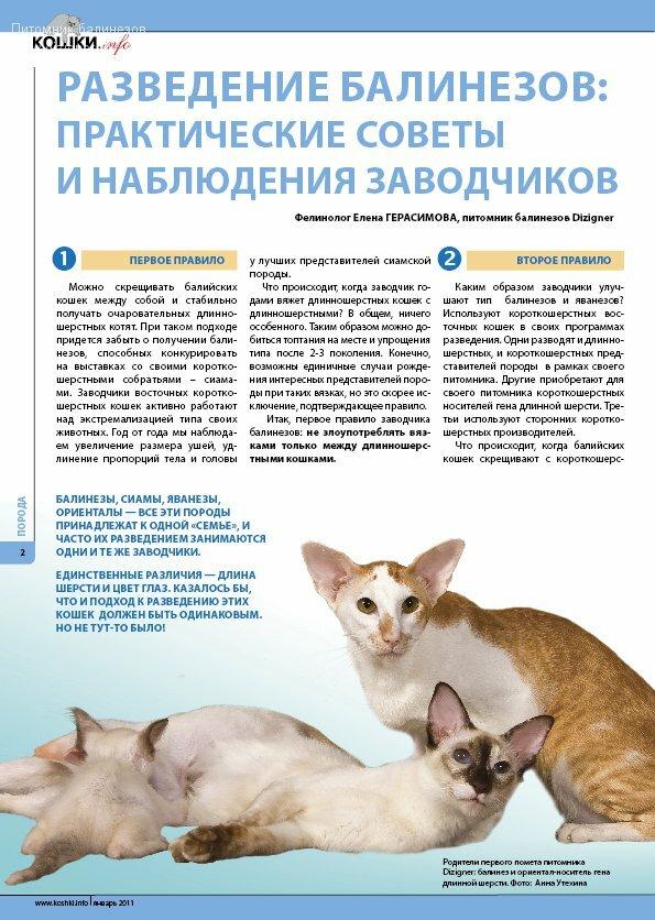 Балийская кошка с котенком в журнале Кошки Info