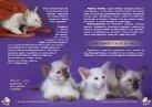 zdorov-kitten-3