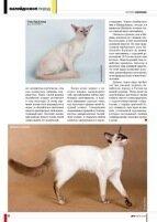 Балийская кошка или балинез в статье о породе
