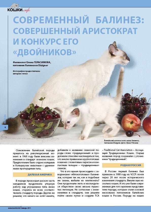 Балинезы и длинношерстные кошки с сиамским окрасом