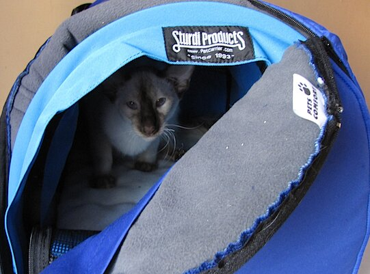 переноска для кошки с чехлом
